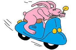 Moto del conejo