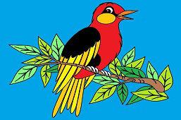 Pájaro cantores